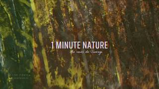 Le Cerf Pirate - 1 MINUTE NATURE - EP 05