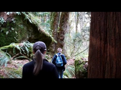 Hiking Wilderness Peak Loop (Cougar Mountain) in the Issaquah Alps