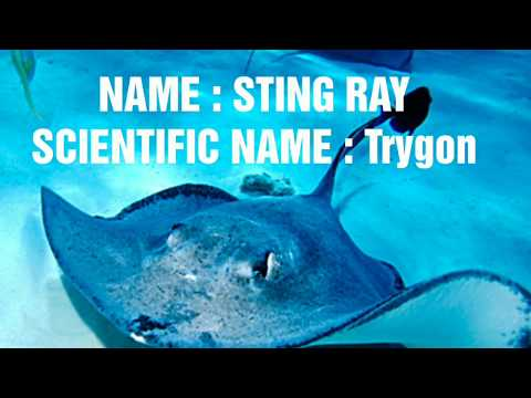 Scientific Names Of Cartilaginous Fishes (Chondrichthyes) | Scientific Names Of 10 Fishes