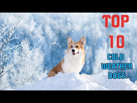 TOP 10 BEST COLD WEATHER DOGS - 2019