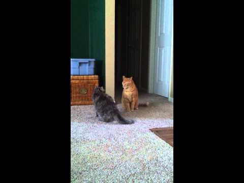 Battle of Feline Frenemies