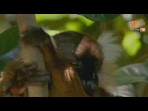 [สารคดี 116] ท่องโลกกว้าง ตื่นตากับสัตว์แสนแปลก ตอน เกือบเหมือนมนุษย์