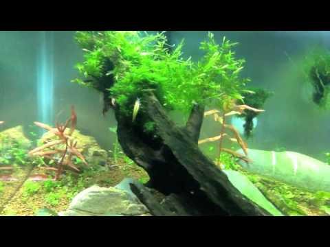 Tutorial sobre plantas y musgos para tu acuario youtube for Plantas de acuario
