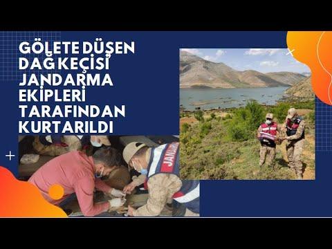Gölete düşen dağ keçisi jandarma ekipleri tarafından kurtarıldı