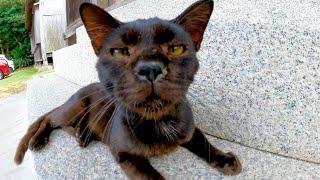 神社に行ったら黒猫がいたのでナデナデしたらゴロゴロと喜んで懐いてきた
