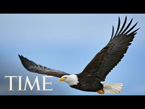 Republicans Plan To Roll Back Parts Of The Landmark Endangered Species Act | TIME