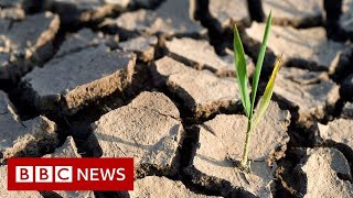 UN climate change goal now 'within reach' - BBC News