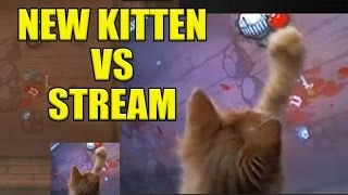 My New Kitten Interrupts Stream - 8/25 Stream Highlight