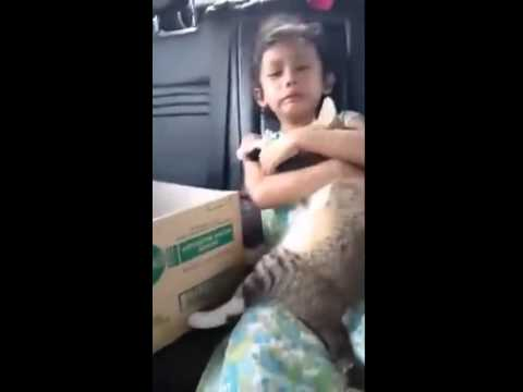 Kehilangan kucing kesayangan
