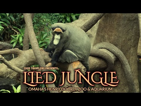 Lied Jungle | Omaha's Henry Doorly Zoo & Aquarium