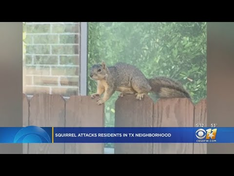 Keith, Tony & Kat - Squirrel is Terrorizing A Neighborhood And Two Moms Already In Hospital