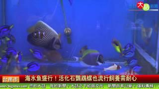 養海水魚盛行! 活化石鸚鵡螺也流行飼養需耐心 今日大話新聞