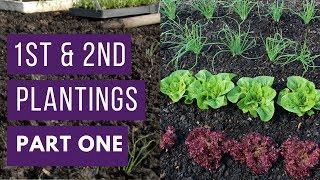 Increase harvests by planting early, before new plantings in summer