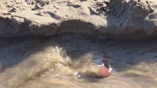 River Sediment Processes