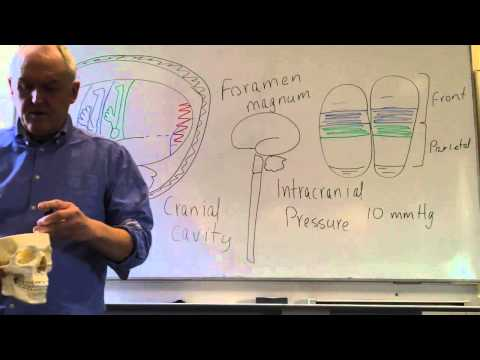 Brain and head injurys lesson 1, Introduction, intracranial pressure and level of consciousness
