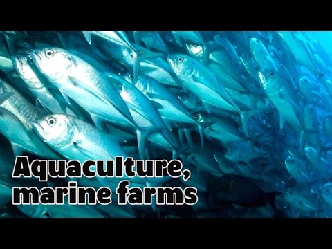 Aquaculture, marine farms