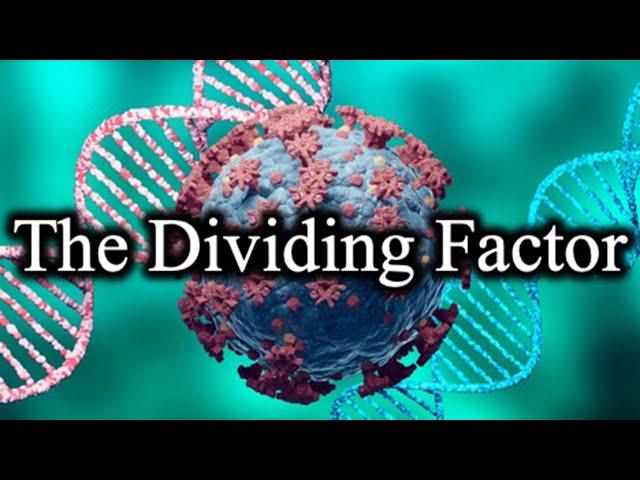 The Dividing Factor - 16 September 2021