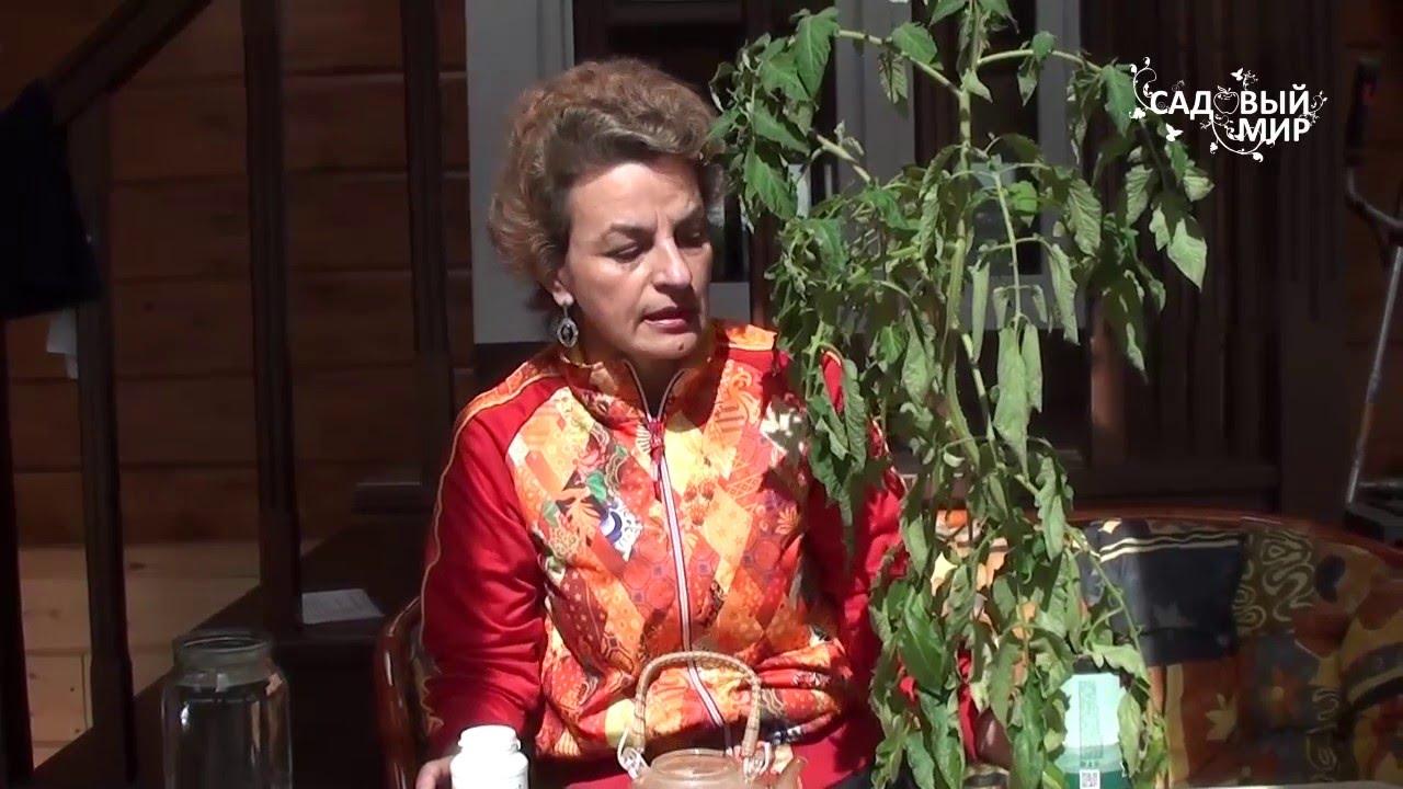 """Почему вянут листья рассады. Сайт """"Садовый мир"""""""