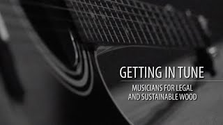 Getting In Tune: Musicians for Legal and Sustainable Wood