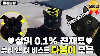 [찜꽁습꽁] 상위 0.1% 천재 고양이 💖다홍이💖 모음! 세상에 다홍이 하버드 가야 할 것 같아요. (진심)ㅣ뷰티 앤 더 비스트 (beast)ㅣSBS ENTER.