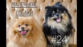 Дай лапу #24 Маленькие собаки