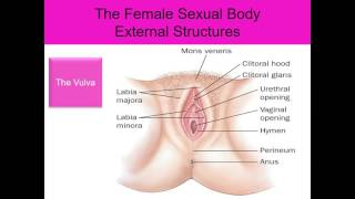 Human Sexuality Ch 2 Female external structures