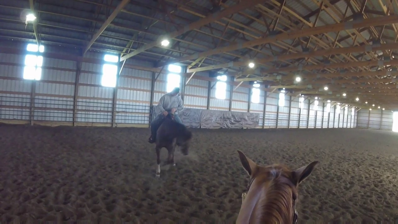 Dallas Cunningham Professional Reining Horse Trainer, Framing up ...