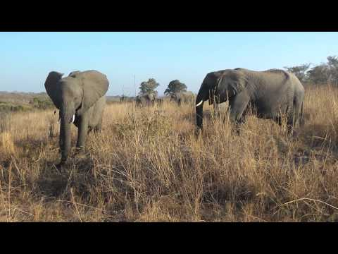 Sydafrika-Swaziland 2012