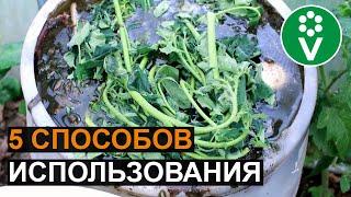 НЕ ВЫКИДЫВАЙТЕ ПАСЫНКИ ТОМАТОВ! Используйте их с пользой для сада и огорода!