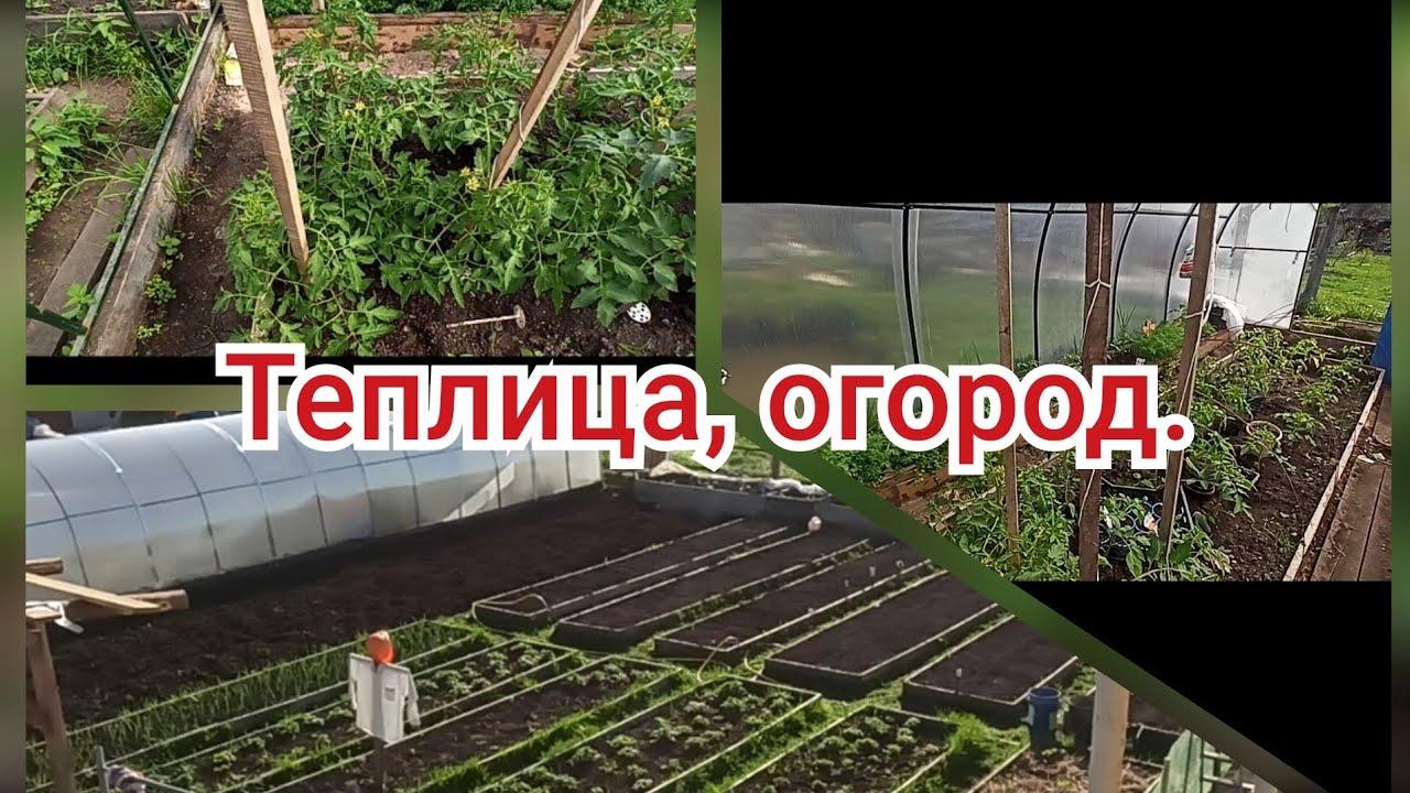 огород теплица видео