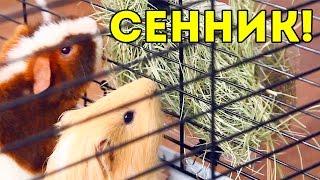 Как сделать сенник для морской свинки: DIY / SvinkiShow