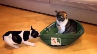 Щенок пытается отобрать спальное место у кота