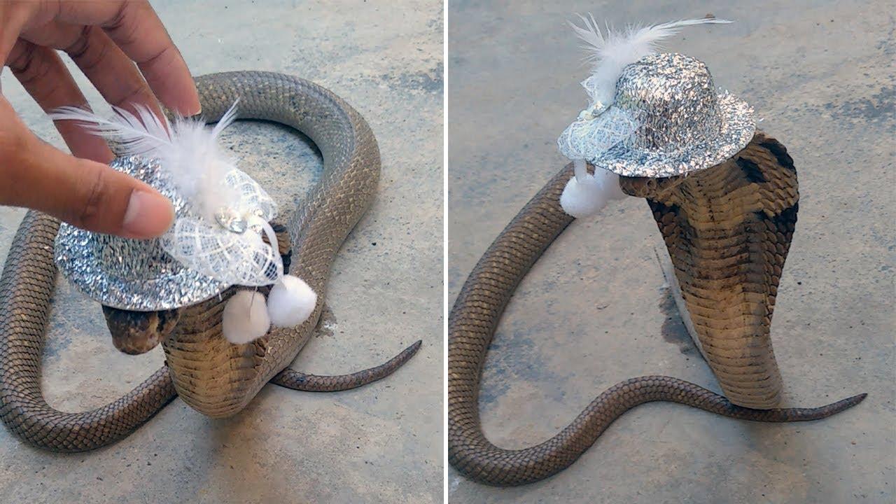 Wild Cobra