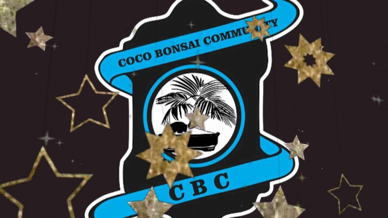 Bonsai Kelapa Coco Bonsai Community Lampung Youtube