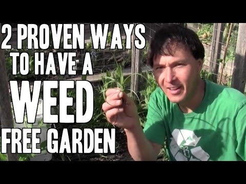 2 Proven Ways to Have a Weed Free Vegetable Garden