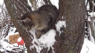 Котята и Коты и Зима