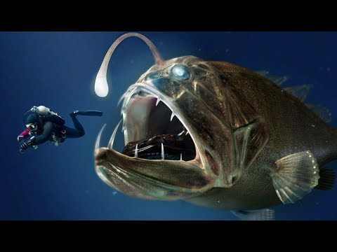 CREEPIEST Animals In The World!
