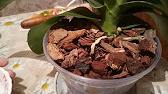 . И мох сфагнум для орхидей) можно купить во многих цветочных магазинах беларусии. Минск (в минске мы работаем с более чем 20 магазинами.