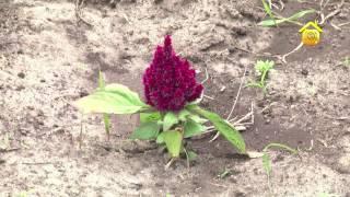 Азы почвоведения. Классификация почв, удобрения, кислотность // FORUMHOUSE