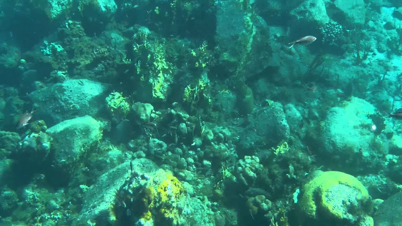 St Thomas, USVI Snorkeling at Turtle Cove - YouTube