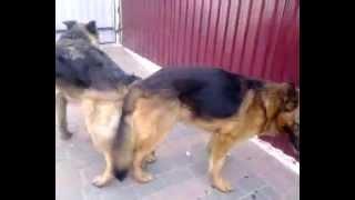 секс поза по собачьи
