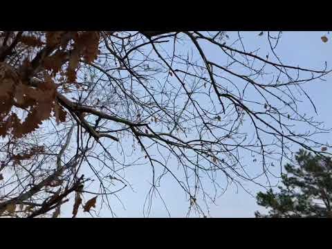 Rafet El Roman - Yaşananlar Anlatılmaz 2021 Yeni (Cover klip by Rashad)
