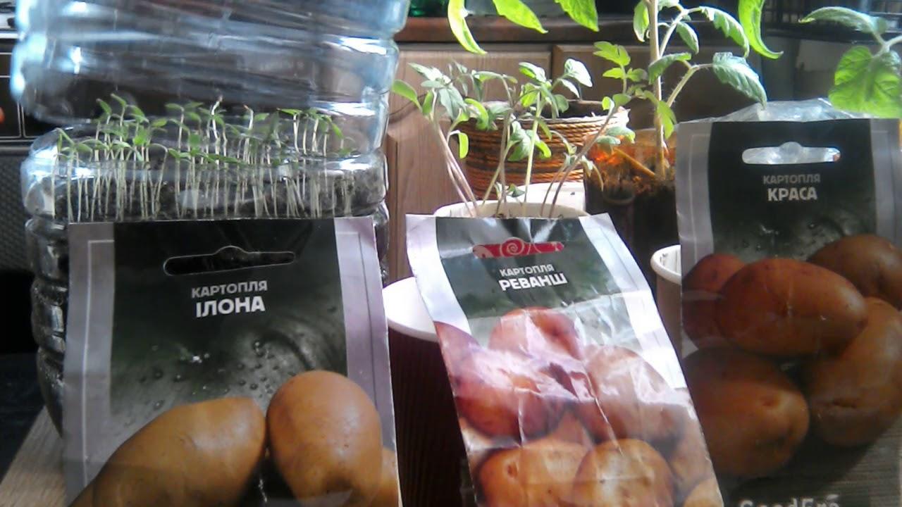 знаю, онлайн фильм по выращиванию картошки из семян замыслу дизайнера