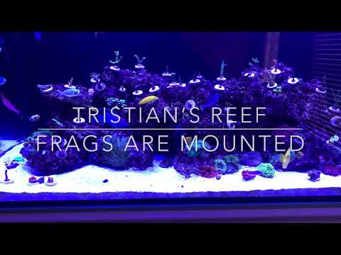 Tristians Reef Update : Frags Mounted