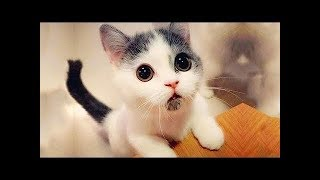 ♥Cute Cats and Kittens Doing Funny Things 2018♥ #2 - Funny Cat compilation