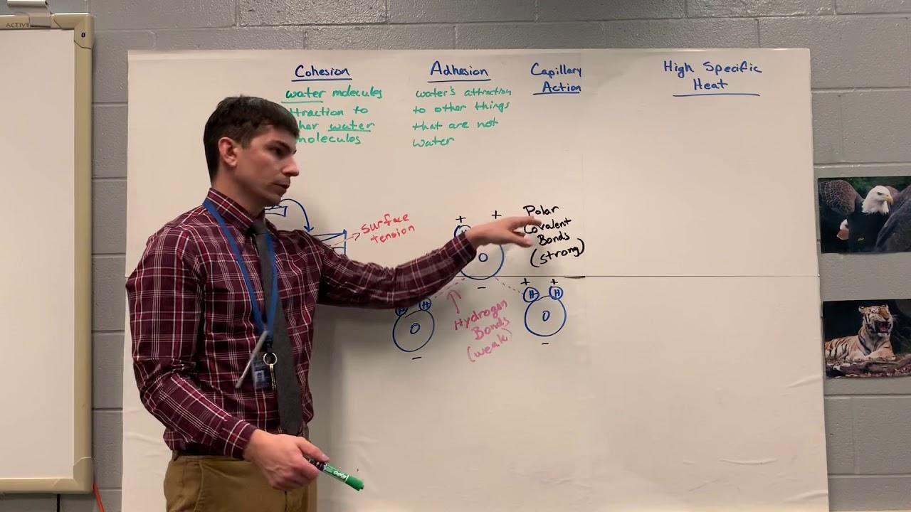 Keystone Biology Review 3 - YouTube
