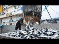 - Pesca Grande En Las Profundidades Del Mar Con Un Gran Barco