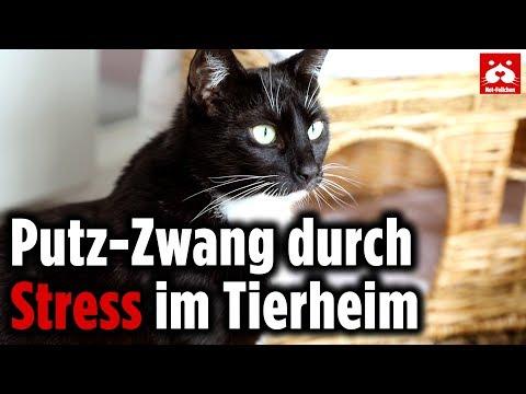 Katze Mimi hat Putzzwang und leckt sich das Fell von den Pfoten – Notfellchen der Woche