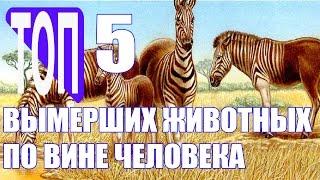 5 видов вымерших животных по вине человека