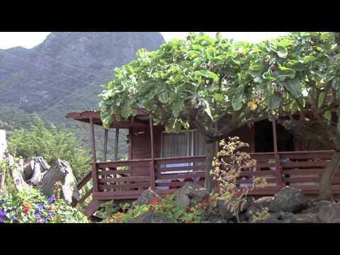 isla (island- archipel) juan fernandez - flora-flore- partie 03